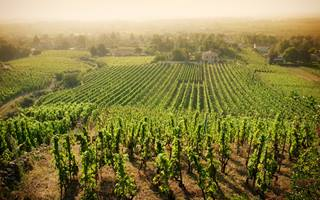 An image of a Cotes du Rhone vineyard