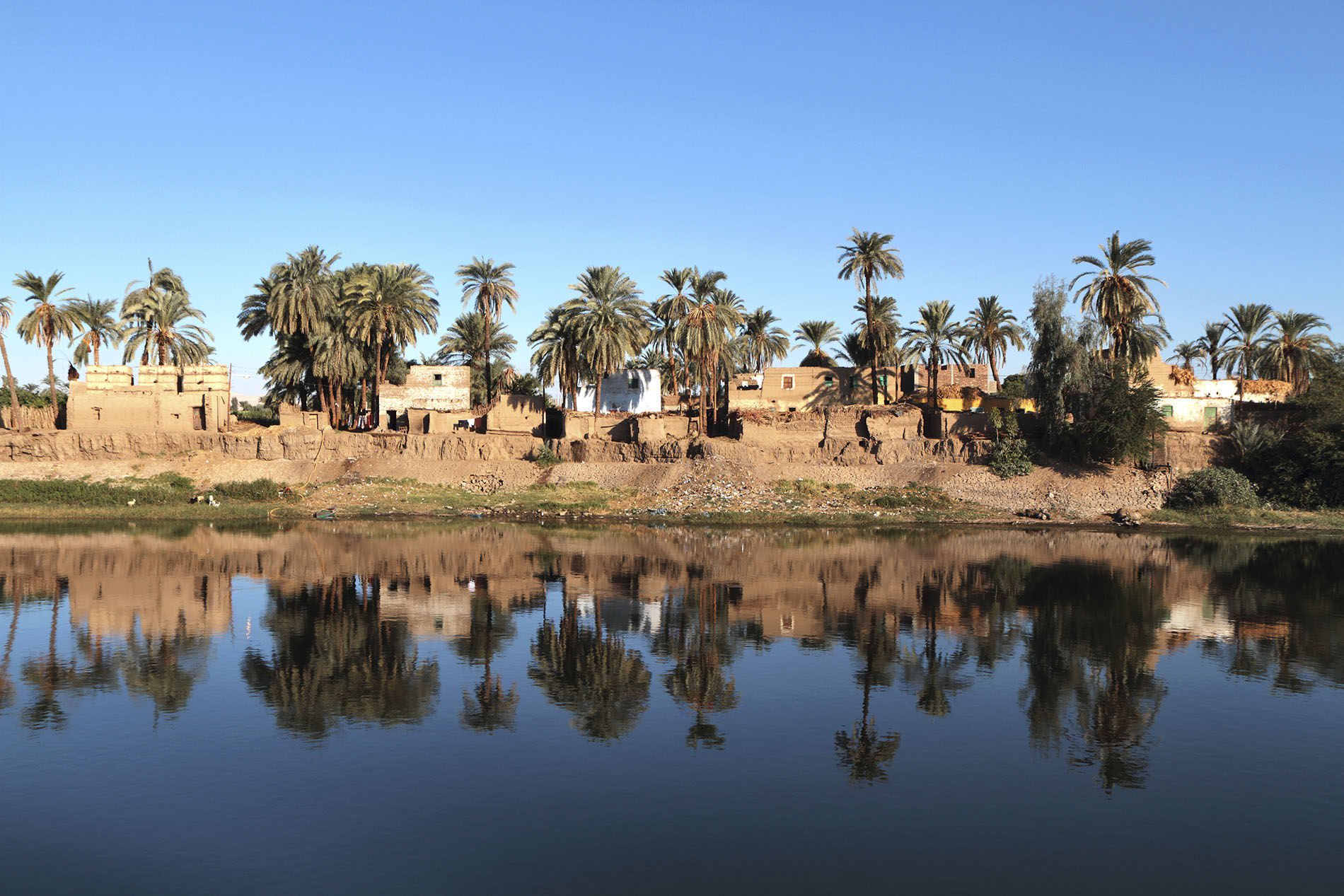 Nile River Trees